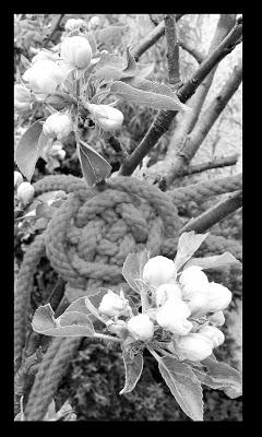 Springtime Shibari