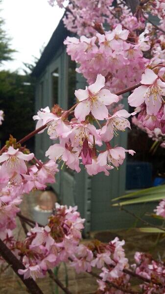 Blossom - Masturbation Monday