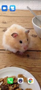 a hamster photo on a phone